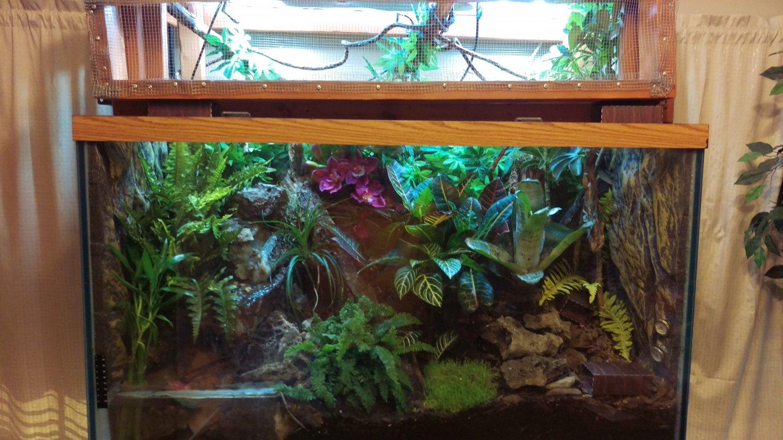Chameleons And Frogs Chameleon Forums