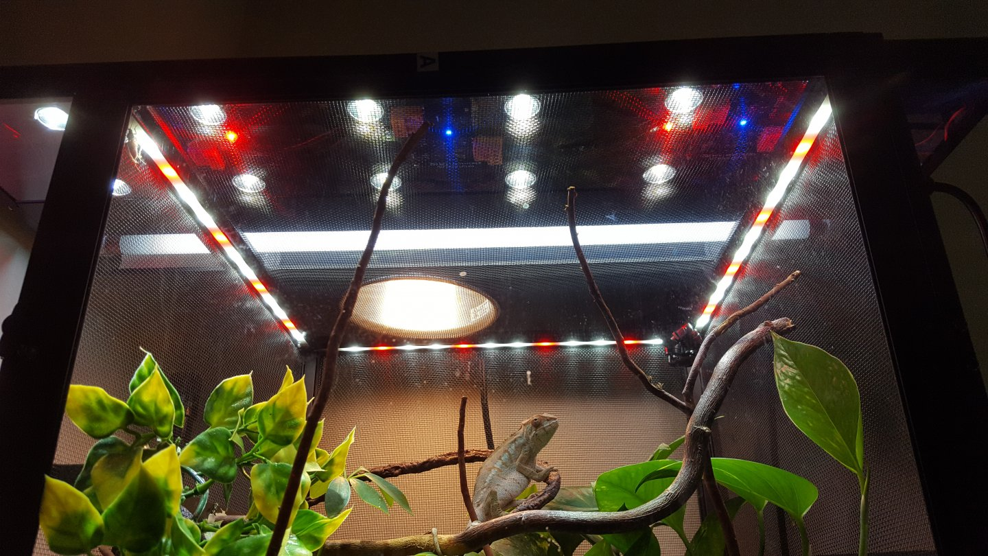 Reptibreeze Led Good Or Just A Gimmick Chameleon Forums