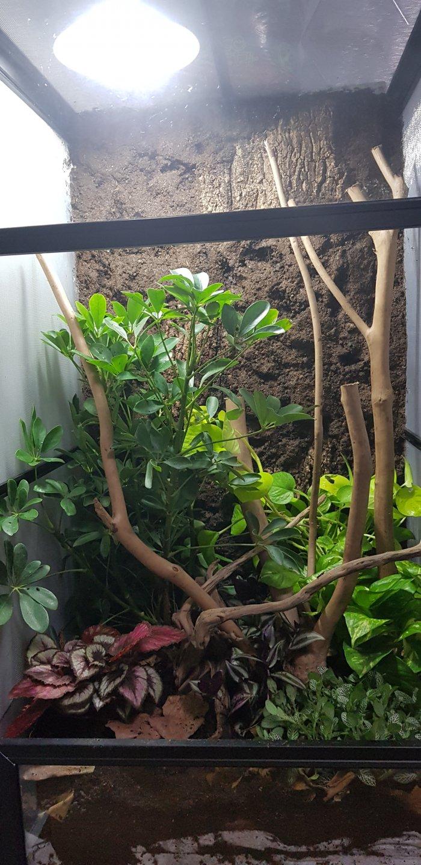 Bioactive Vivarium For Veiled Chameleon Chameleon Forums