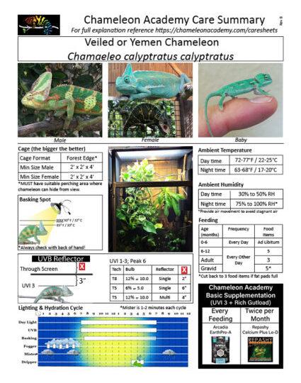 care-sheet-Veiled-Chameleon-022020-scaled-425x540.jpg