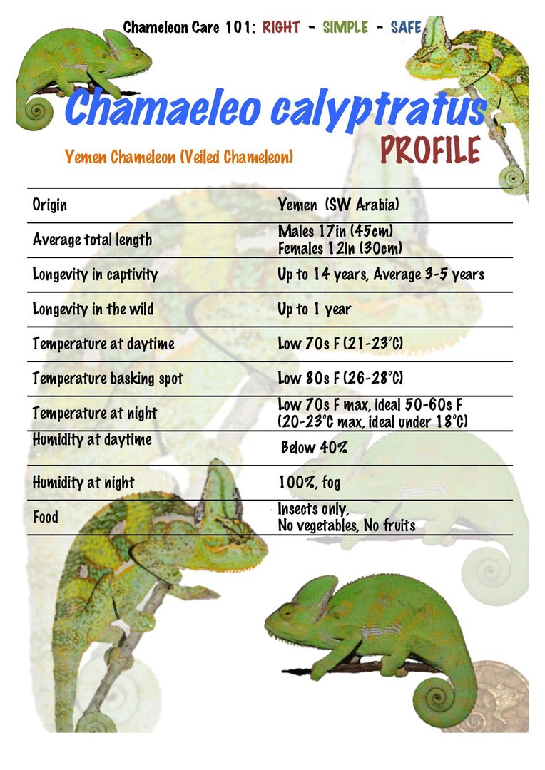 CC01 Yemen Veiled Chameleon Chamaeleo calyptratus PROFILE-page-001.jpg