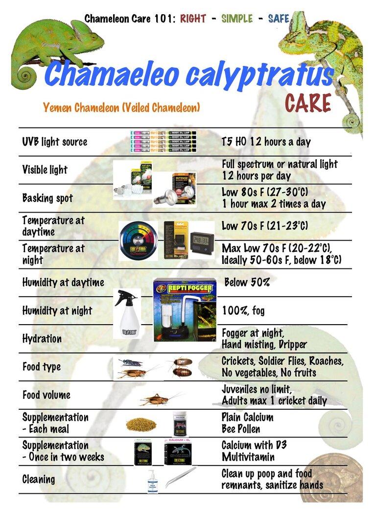 CC03 Yemen Veiled Chameleon Chamaeleo calyptratus CARE-page-001.jpg