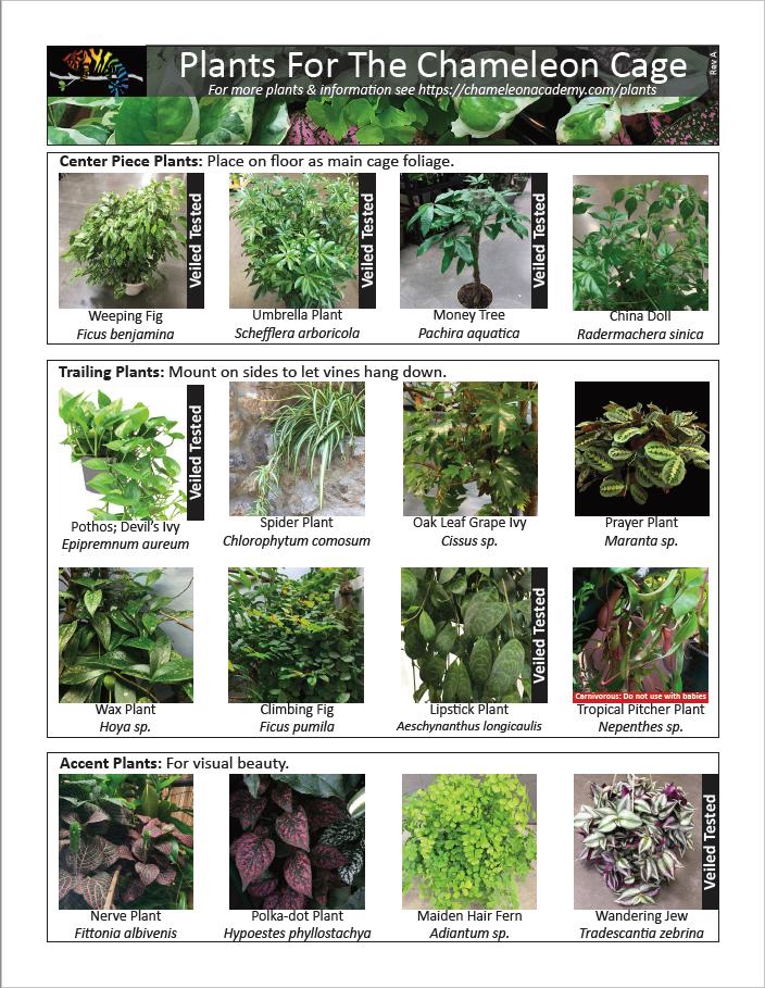 chameleon academy plants.png