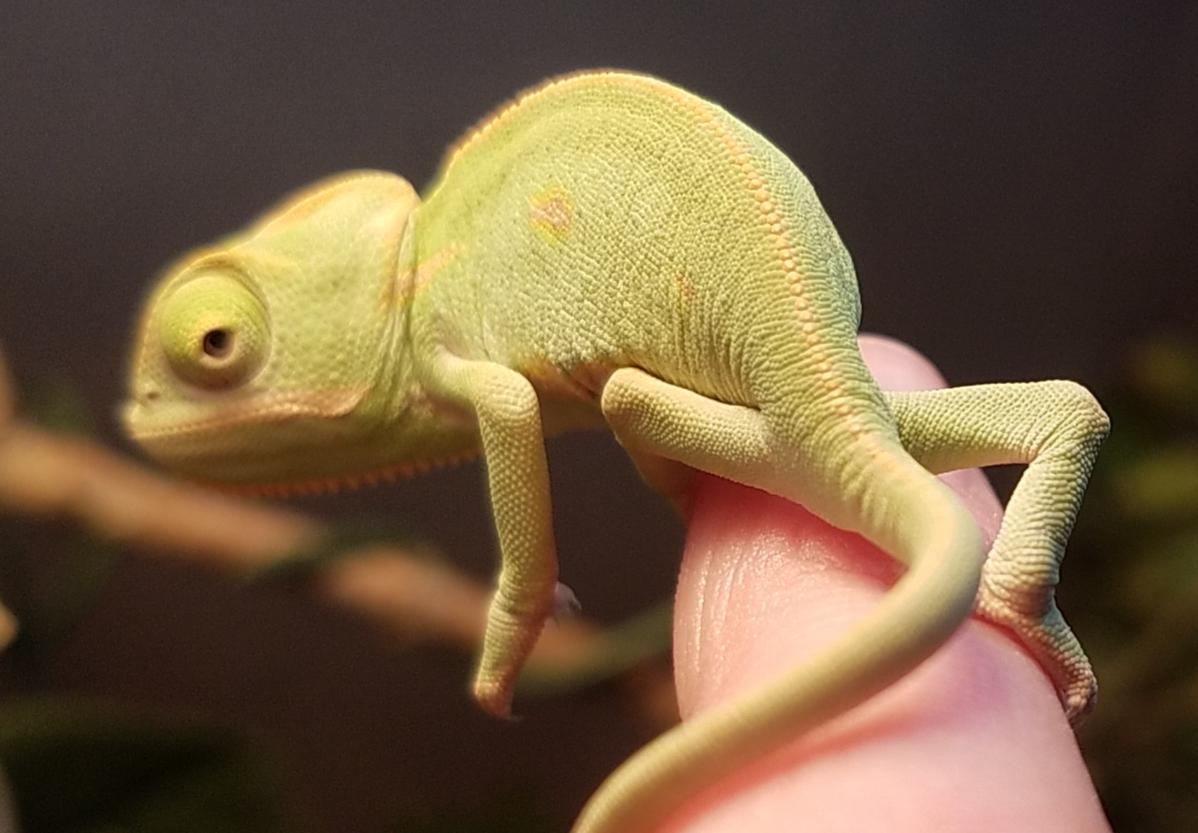 Chameleon baby #1- B.jpg