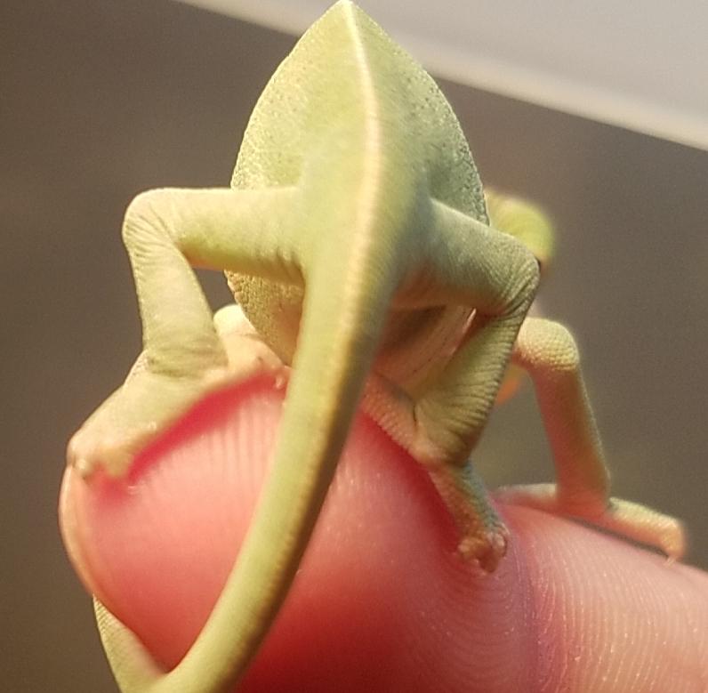 Chameleon baby #3 - B.jpg