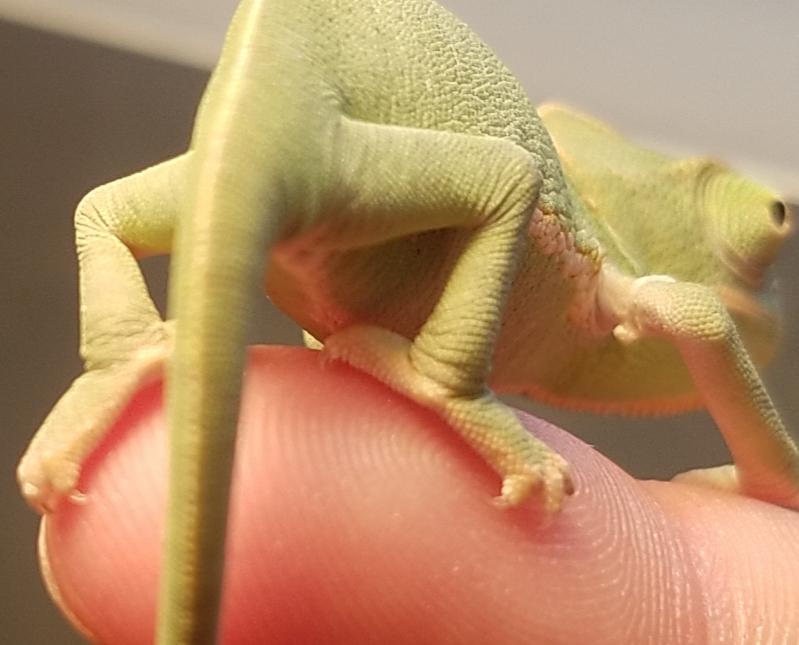 Chameleon baby #3 - C.jpg