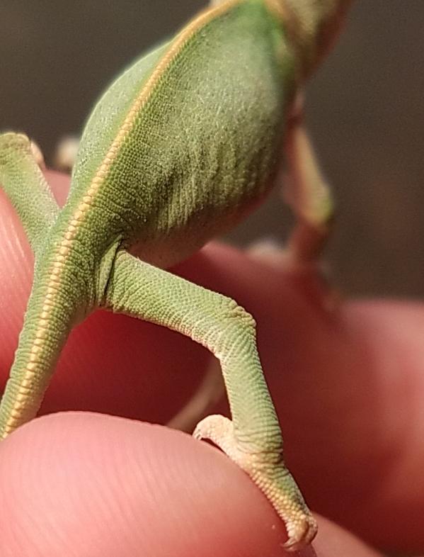 Chameleon baby #4- B.jpg