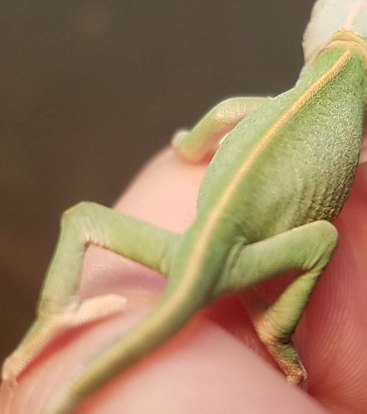 Chameleon Baby #4- C.jpg