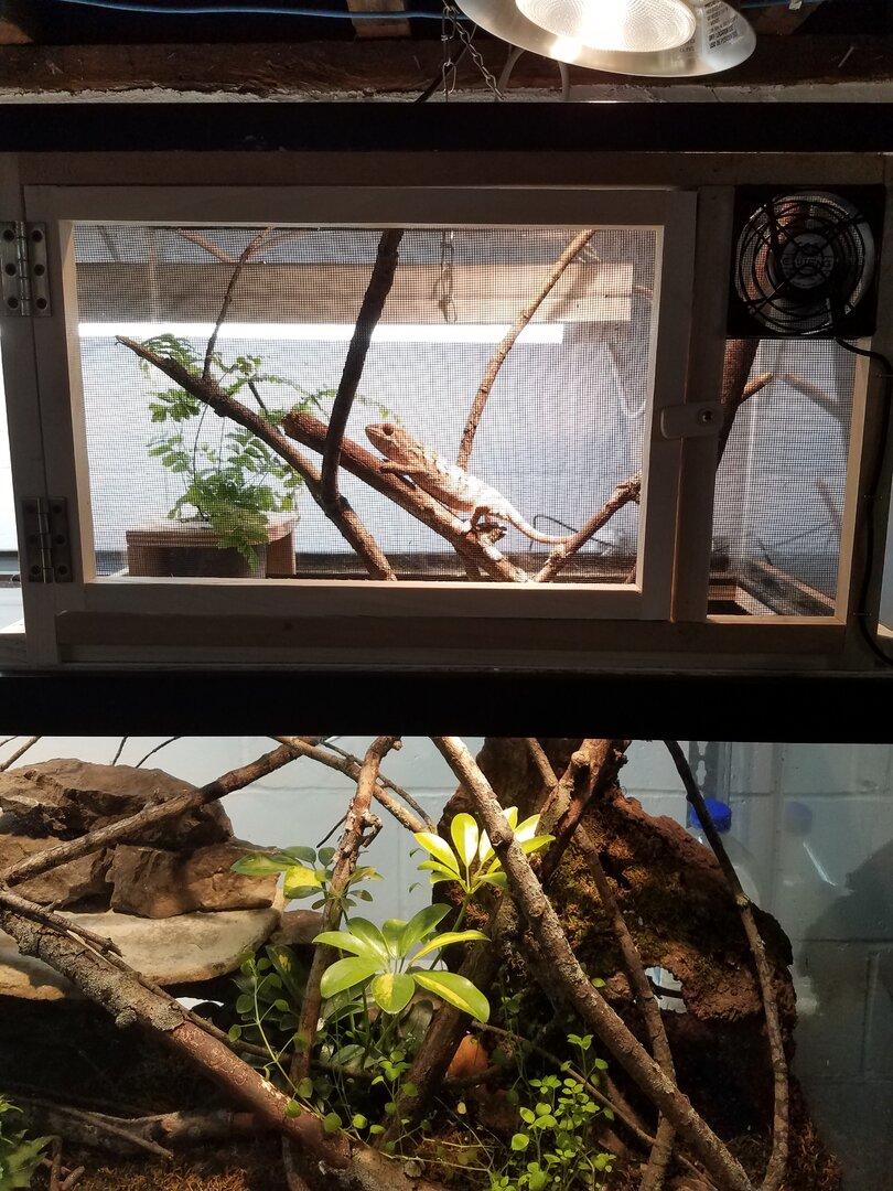 chameleon setup 2.jpg