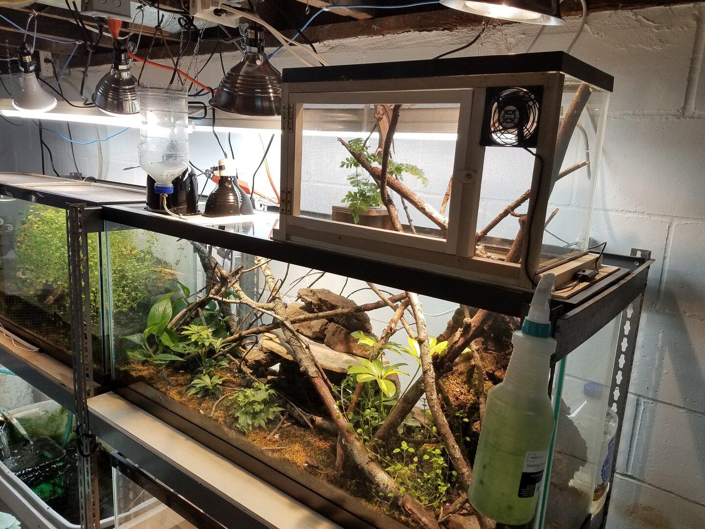chameleon setup.jpg