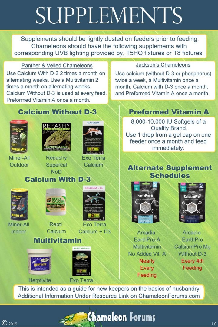 chameleon-supplements.jpg