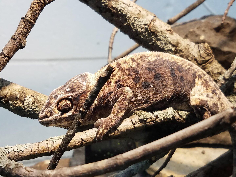 chameleon thursday.jpg