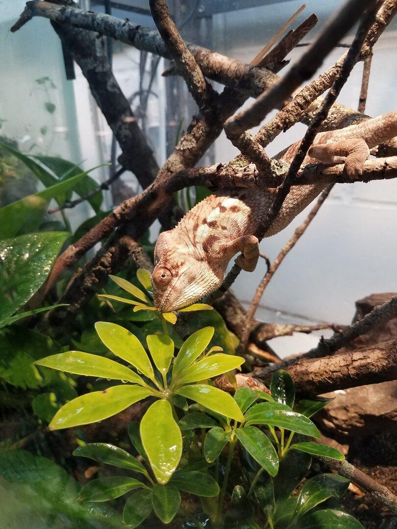 chameleon wednesday.jpg