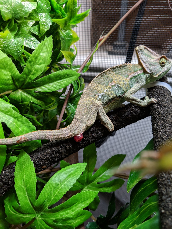 Chameleon_3.jpg