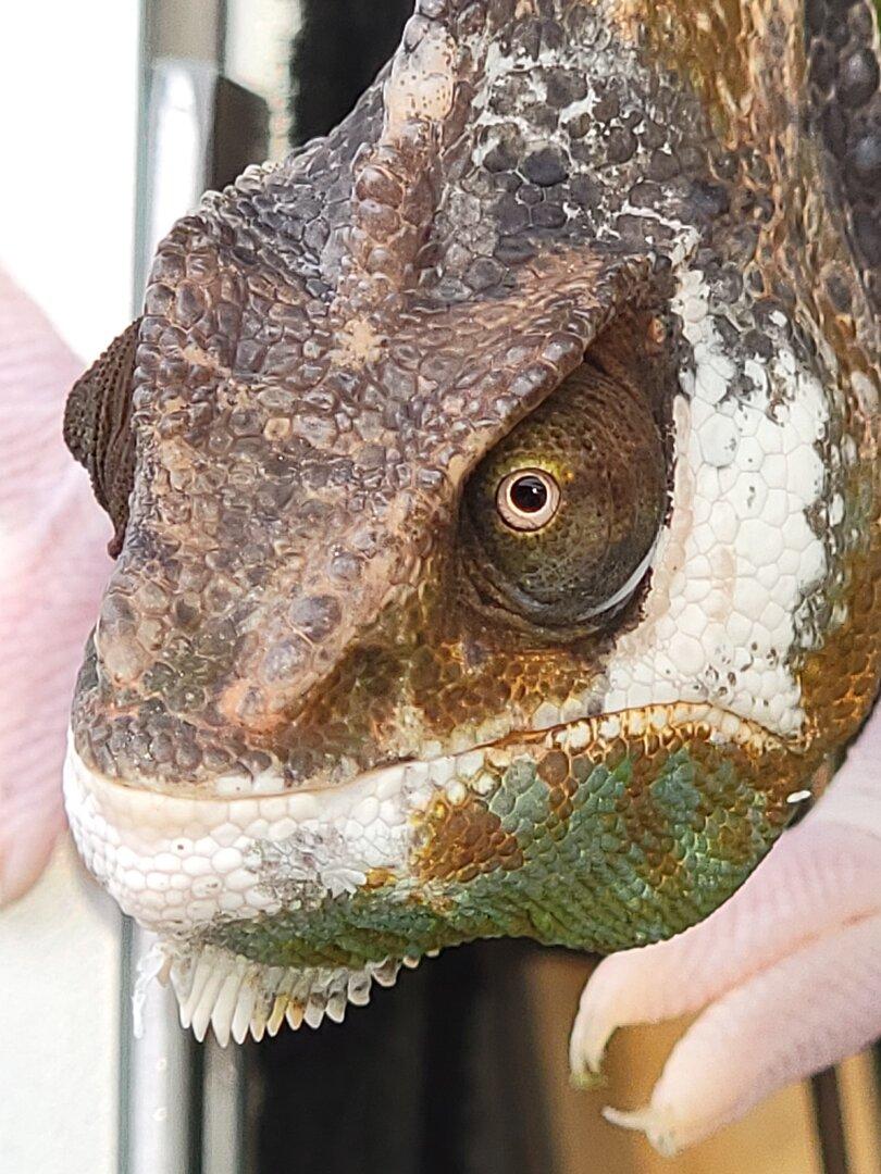 Dino Face.jpg