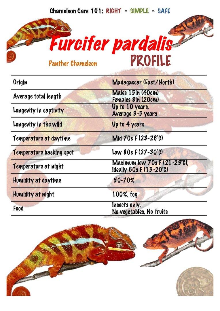 FP1 Panther Chameleon Furcifer pardalis PROFILE-page-001.jpg