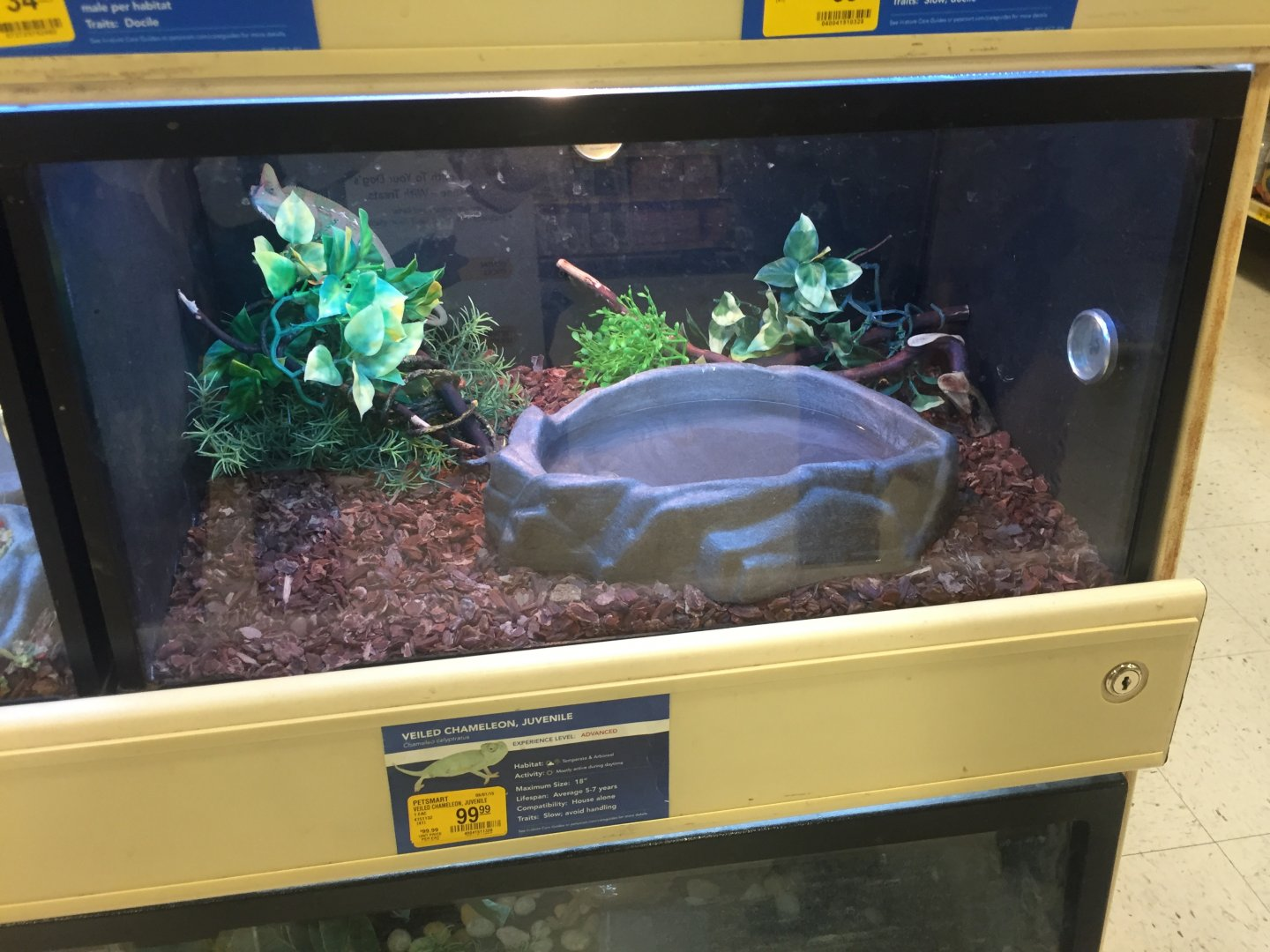 Veild at Petsmart | Chameleon Forums