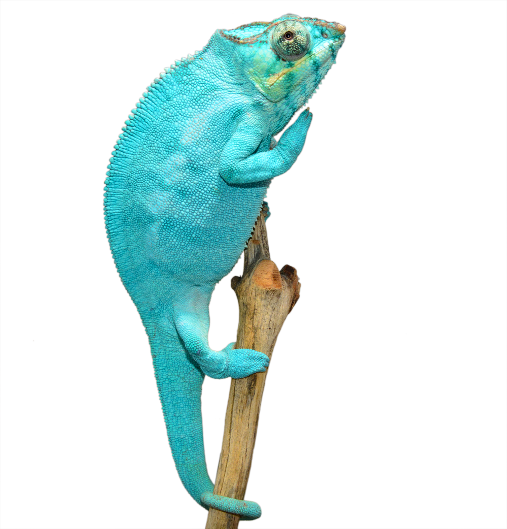 Nosy Be Sire Freeze (1).png