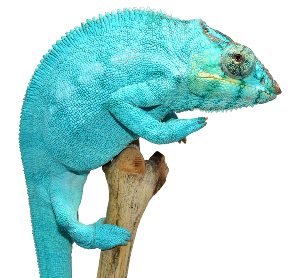 Nosy Be Sire Freeze (4).png