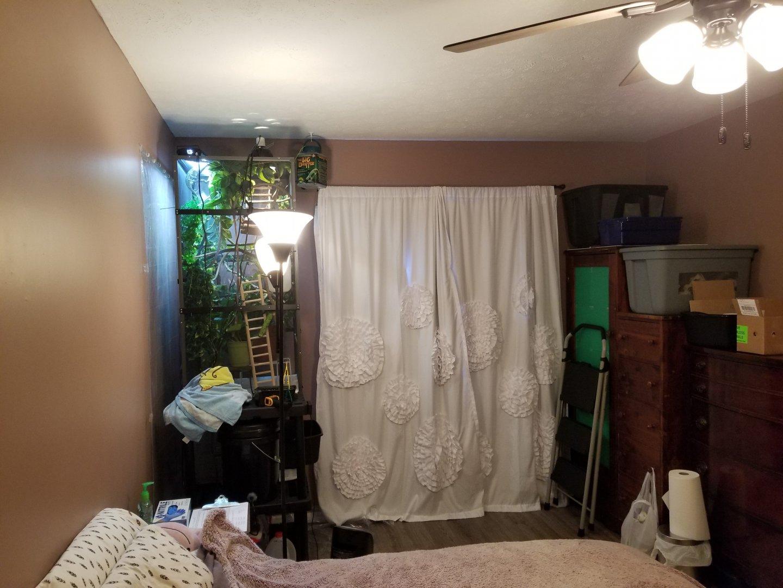 pepes half of my bedroom.jpg