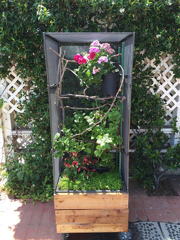 planter box cage 600.jpg