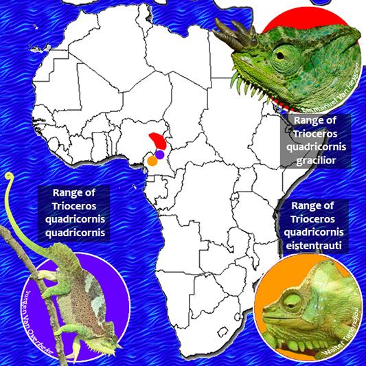 Quadricornis Range Map 533.jpg