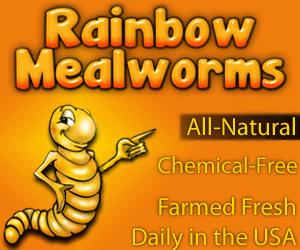 rainbow-mealworms.jpg