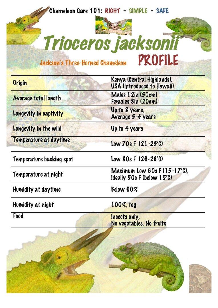 TJ1 Jackson Three Horned Chameleon Trioceros jacksonii PROFILE-page-001.jpg