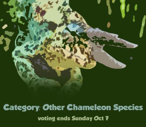 vote_other1.jpg