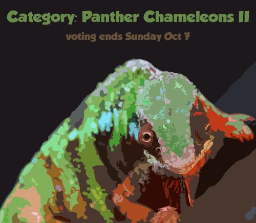 vote_panther2.jpg