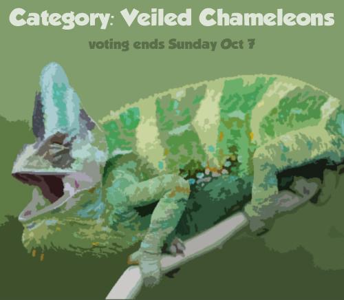 vote_veiled1.jpg