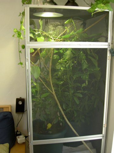 more plants for enclosure.JPG