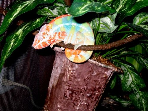 Helix Sleeping Bright Colors.jpg