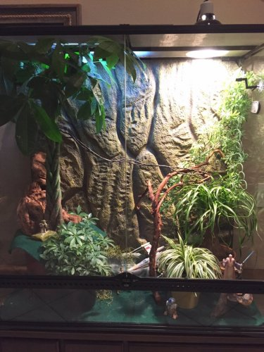 Exo Terra Sunray Light Chameleon Forums