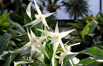 Orchid_0.jpg
