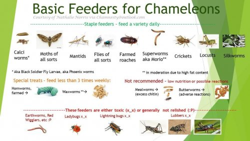 Basic Feeder pic.jpeg