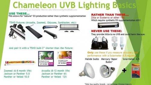 UVB lighting pic.jpeg
