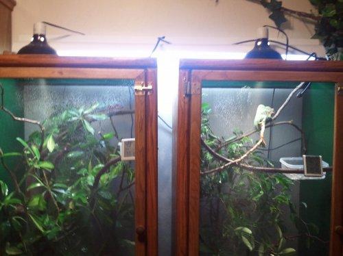 chameleons 030.jpg