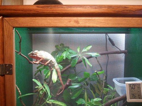 chameleons 029.jpg