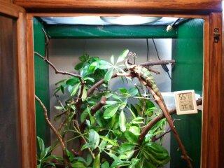 chameleons 034.jpg