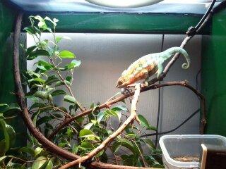 chameleons 035.jpg