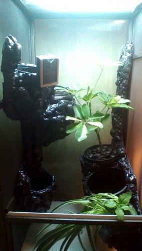 IMG_B4 plants.jpg