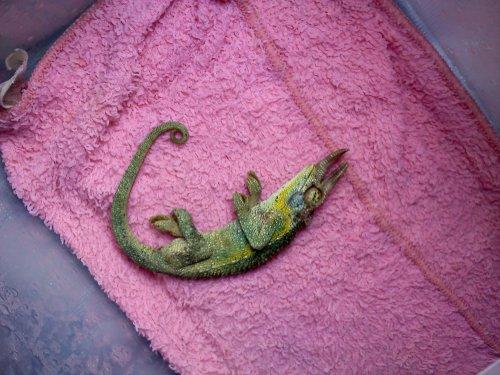chameleon blog.jpg