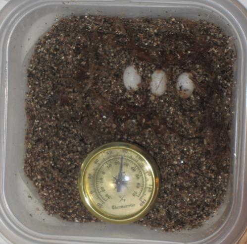 Eggs3-21-11.jpg