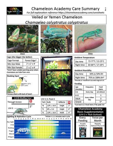 care sheet Veiled Chameleon 122819.jpg