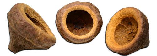monkeypods.jpg