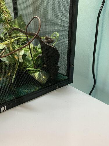 chameleon4.jpg