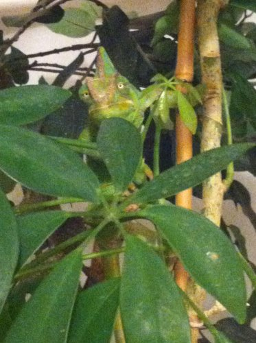 teal'c plant.jpg