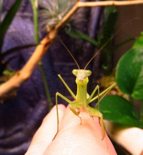 mantis edited.jpg