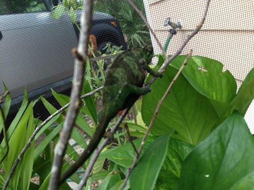 Montium female 07-24-13.jpg